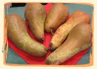 Poires Conférence - Vergers des Moncels - Producteur de fruits à Lagney