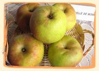 Pomme Boskoop - Vergers des Moncels - Producteur de fruits à Lagney