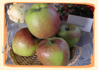 Pomme Braeburn - Vergers des Moncels - Producteur de fruits à Lagney