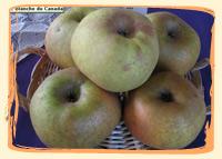 Pommes Canada - Vergers des Moncels - Producteur de fruits à Lagney