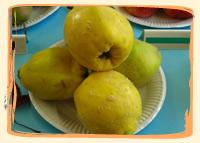 Coing - Vergers des Moncels - Producteur de fruits à Lagney