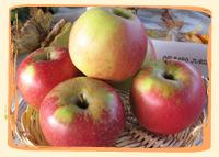 Pomme Delbard Jubile - Vergers des Moncels - Producteur de fruits à Lagney