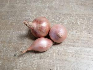 Échalotes nouvelles - Vergers des Moncels - Producteur de fruits à Lagney