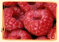 Framboise - Vergers des Moncels - Producteur de fruits à Lagney