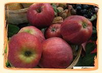 Pomme Gala - Vergers des Moncels - Producteur de fruits à Lagney