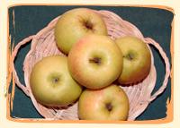 Pomme Golden Rosee - Vergers des Moncels - Producteur de fruits à Lagney