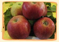 Pommes Jonagored - Vergers des Moncels - Producteur de fruits à Lagney