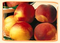 Nectarines Blanches - Vergers des Moncels - Producteur de fruits à Lagney
