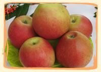 Pommes Corail-Pinova - Vergers des Moncels - Producteur de fruits à Lagney