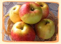 Pomme Delbard estivale - Vergers des Moncels - Producteur de fruits à Lagney