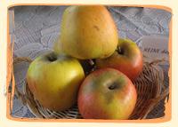 Pomme Reine des Reinettes - Vergers des Moncels - Producteur de fruits à Lagney
