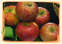 Pomme Rubinette - Vergers des Moncels - Producteur de fruits à Lagney