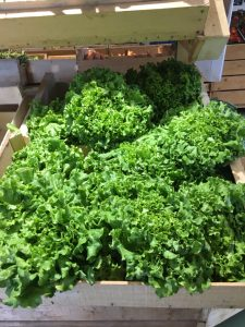 Salade Batavia - Vergers des Moncels - Producteur de fruits à Lagney