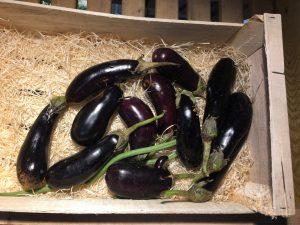 Aubergines - Vergers des Moncels - Producteur de fruits à Lagney