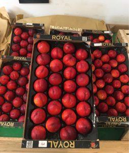 Nectarines Jaunes - Vergers des Moncels - Producteur de fruits à Lagney