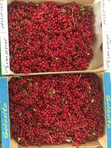 Groseilles - Vergers des Moncels - Producteur de fruits à Lagney
