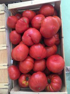 Tomates Cœur de Boeuf - Vergers des Moncels - Producteur de fruits à Lagney